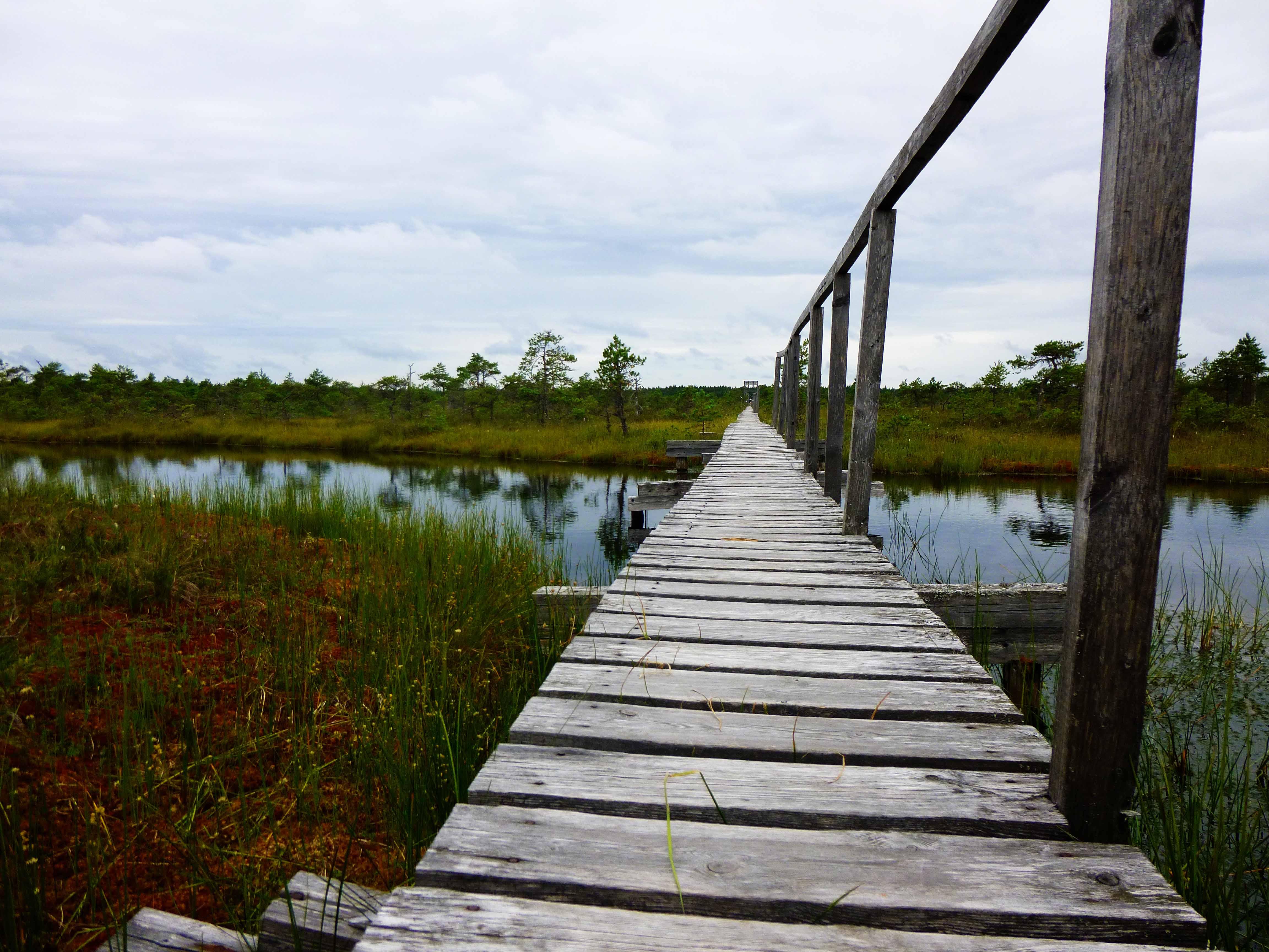 Endla-Moor in Zentral-Estland. Im wunderschönen Nirgendwo!