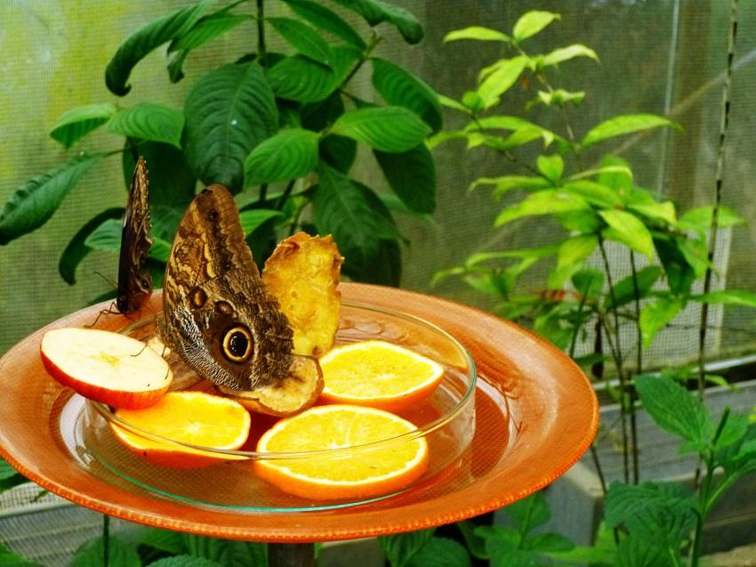 Schmetterlingshaus-Mainau-Bodensee-Kinder