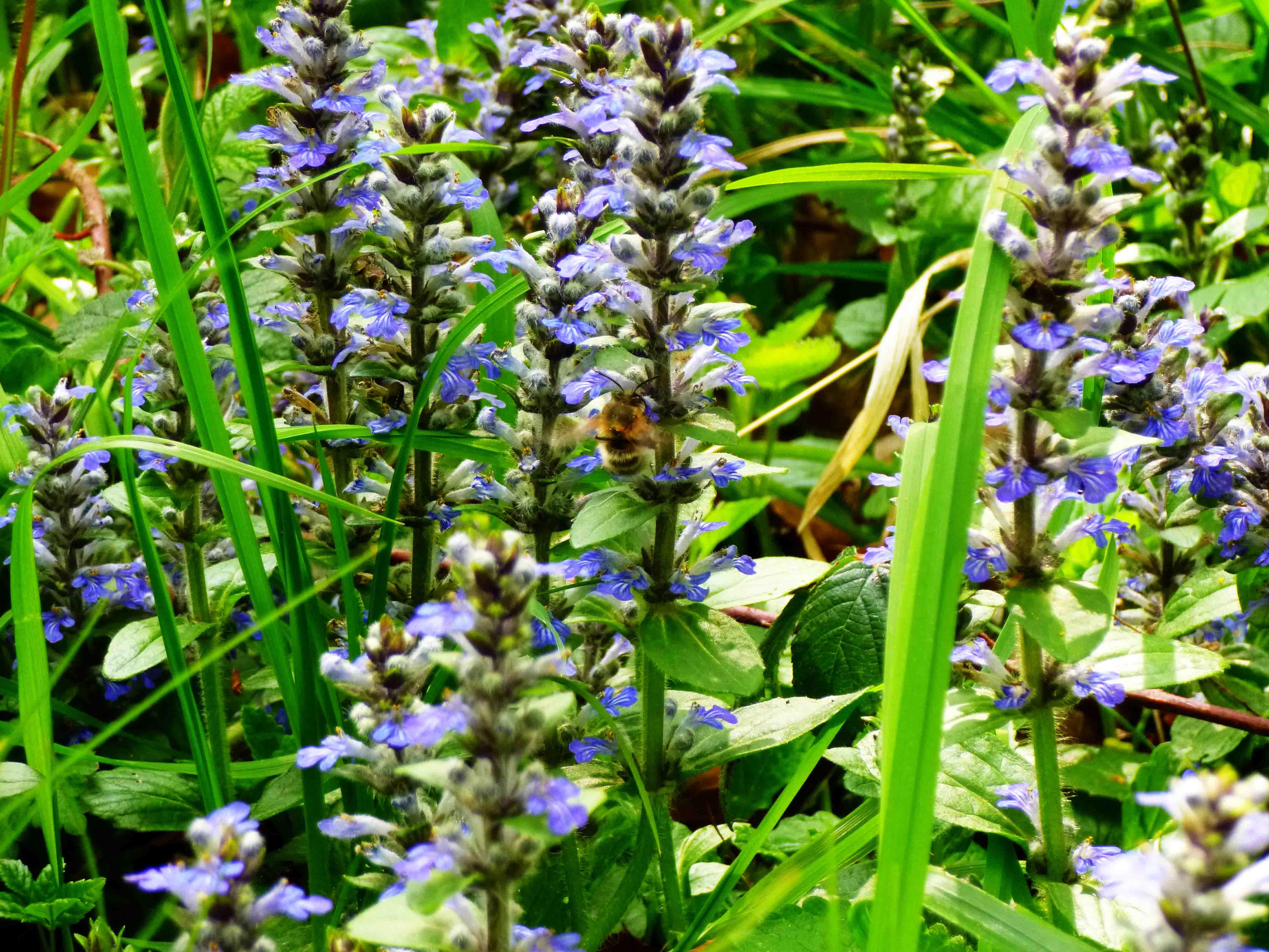 Bienchen (oder Hummelchen) und Blümchen am Wegesrand...