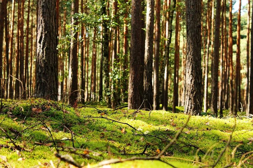 Ich glaube, im letzten Leben war ich ein Waldschrat. So schön...