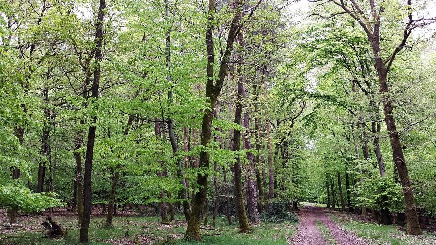 Mein eigenes Tempo mit mir allein. Glück im Moment und auf weichem Waldboden.