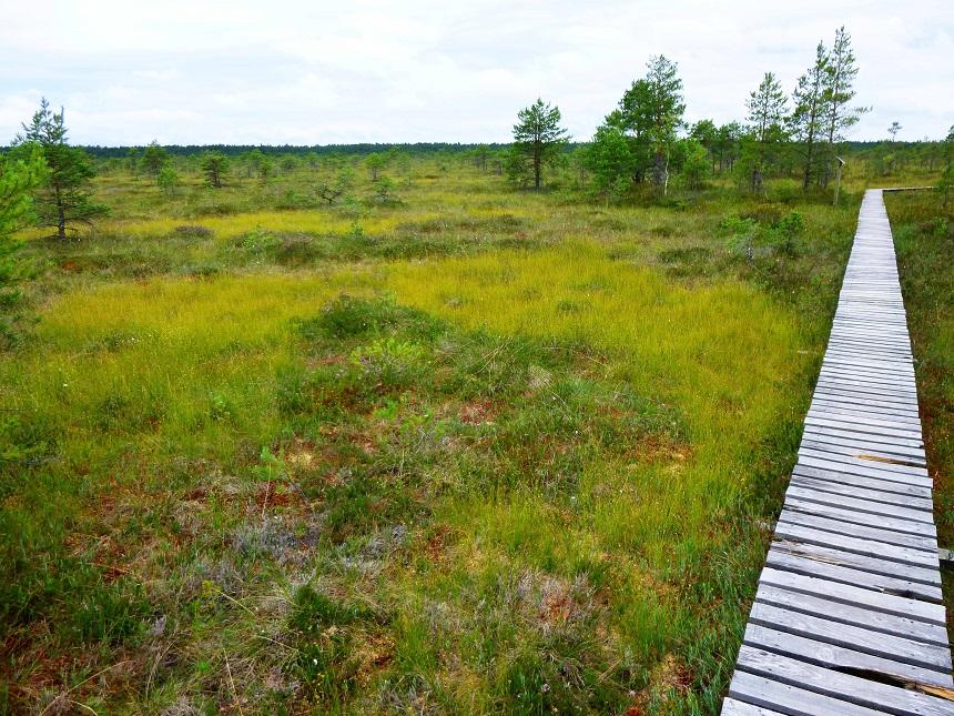 Moorflächen und Bohlenpfade: Das ist mein persönliches Glück.