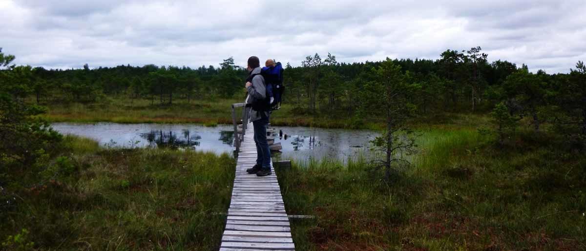 Bären, Moor und Einsamkeit in Estland: Das Endla