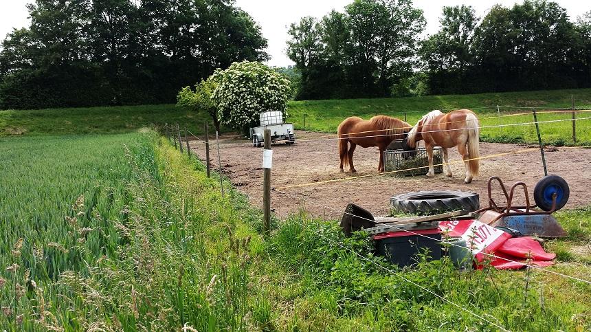 Unser Pferdemädchen freut sich immer über tierische Ablenkung am Wegesrand.