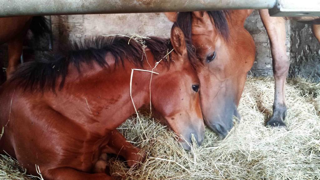 """Gibt es eigentlich unter Pferden auch """"Attachment Parenting""""?"""