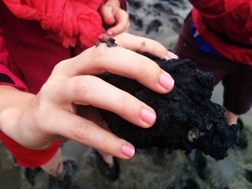 schwarz heißt sauerstoffarm heißt schwefelig riechend. Und schon von außen kann man eine Herzmuschel sehen.