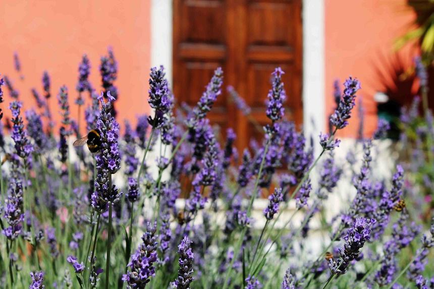Auch in den Altstadtgassen Chiusis schwebt der Geruch von Lavendel