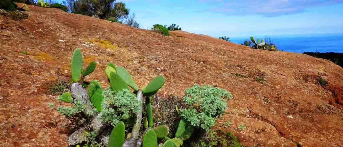 Permalink zu:Welche Kanarische Insel ist für uns geeignet?